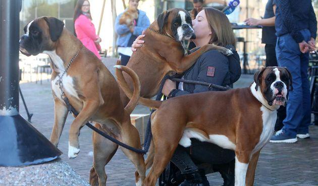 Vikend u znaku pasa: Velika međunarodna izložba na Vunskom polju, ali i tradicionalni izbor za najmješanca na Promenadi