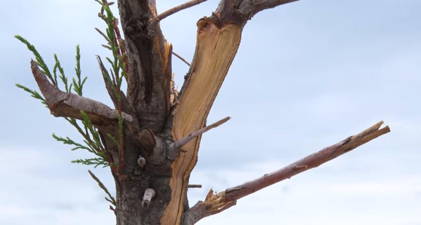 Puntamičani u šoku: Netko je posjekao grane tamarisa uz šetnicu