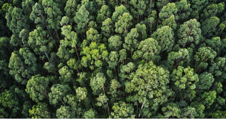 Uključite se u najveću nacionalnu kampanju sadnje stabala u Hrvatskoj 'Zasadi stablo, ne budi panj!'