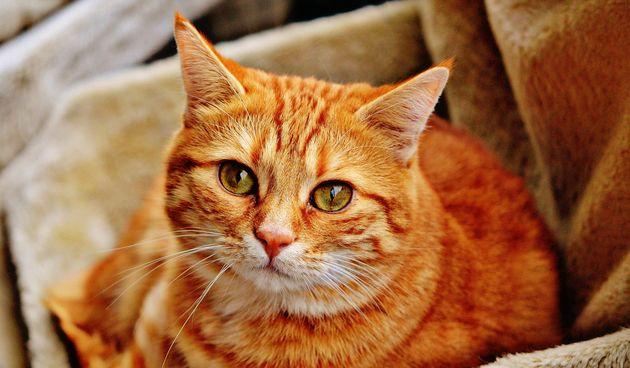 Phil Tedeschi, stručnjak za odnose između kućnih ljubimaca i ljudi, napravio je zanimljiv popis kako kućni ljubimci izražavaju ljubav, posebno mace.