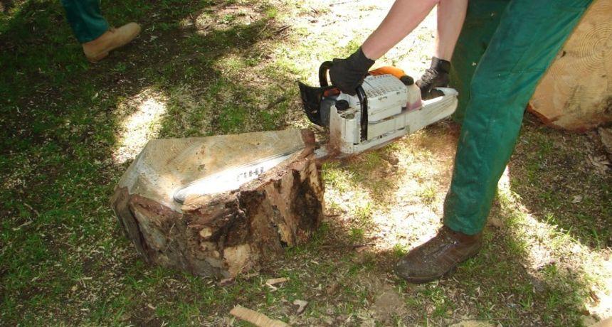 Nestala šuma: Nepoznati lopov u Bosiljevu posjekao stabala za više od 30.000 kuna