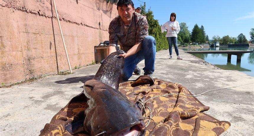 FOTO, VIDEO Ogulinac šest dana čekao soma pa ulovio XXL primjerak - težak 50 kilograma i dug gotovo dva metra?!