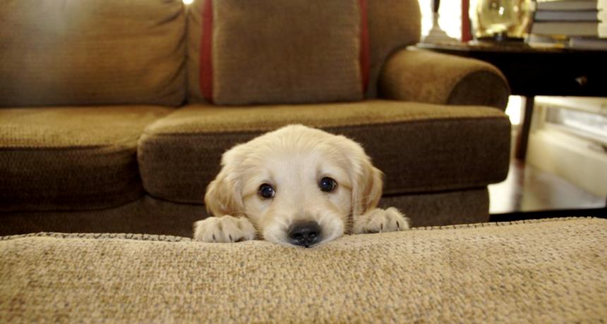 Slatki kućni ljubimci koji su toliko sramežljivi da ih odmah poželite zagrliti