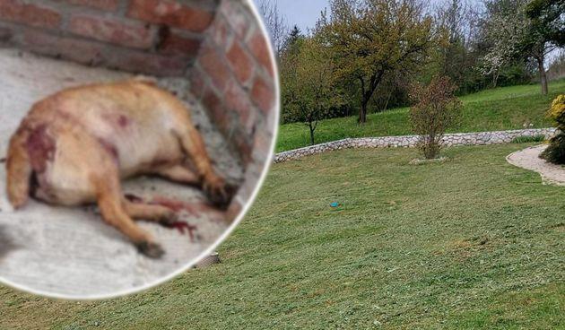 STRAVIČNO! Kujica Maša hladnokrvno je ubijena: 'Ubojica je stajao nekoliko metara od nje'