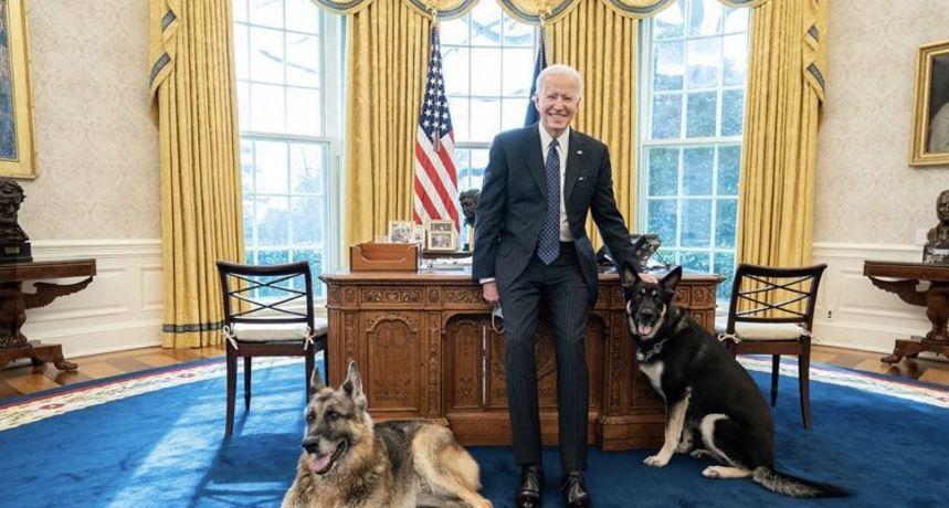 Incident u Bijeloj kući! Bidenov ovčar ugrizao člana osiguranja, prva dama očajna: 'Samo želim da se smire'