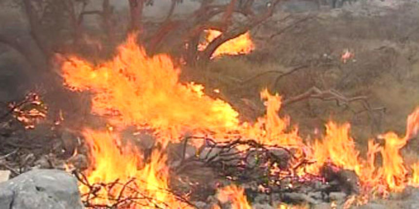 Palili korov, izazvali požar