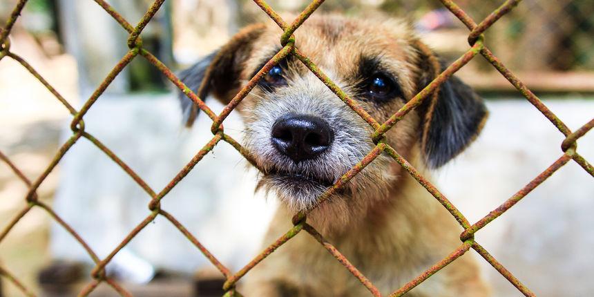 'Zima topla svima': sklonište u Dumovcu moli građane da skupe stare dekice i pomognu psima