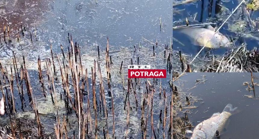 Izvadili 500 kilograma mrtve ribe, a ni mjesec dana poslije ne znaju tko je kriv: Potraga istražuje kako je došlo do zagađenja jezera kod Đakova