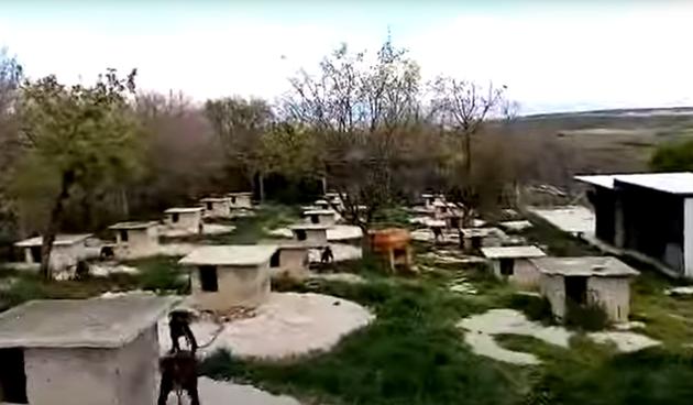 Psi za borbe