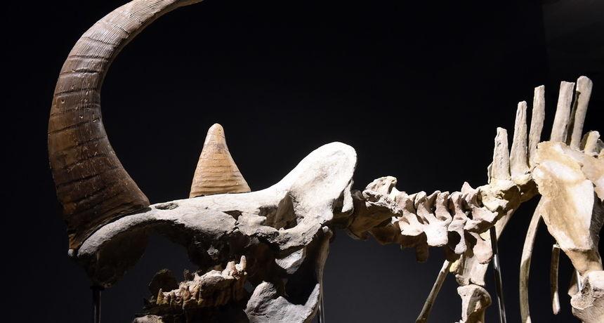 U Kini otkrivena nova vrsta divovskog nosoroga, većeg od žirafe
