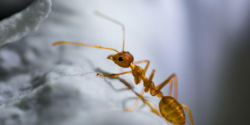 Kako se riješiti mrava? Donosimo nekoliko učinkovitih i prirodnih trikova —  eZadar.hr