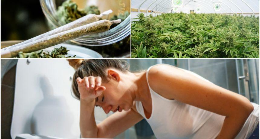 Legalizacija ima i loše strane: Znanstvenici otkrili prilično strašnu bolest povezanu s konzumiranjem kanabisa