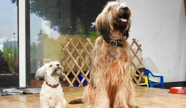 Psi u vrtiću i hotelu za pse 'Veliki i mali'
