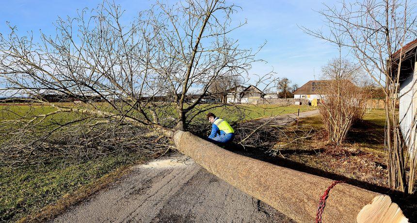 SMRT U ŠUMI Muškarac (64) poginuo tijekom rušenja stabla