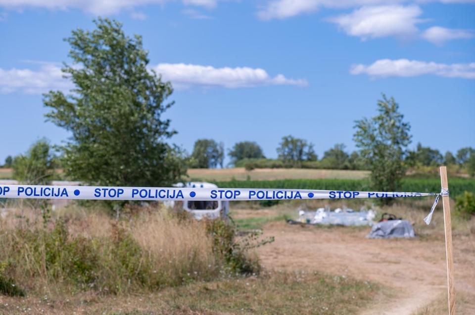 Na području Smilica policija je pronašla preko 7 tisuća stabljika konoplje zasađene među stabljikama industrijske konoplje