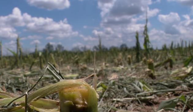 Šteta u poljoprivredi