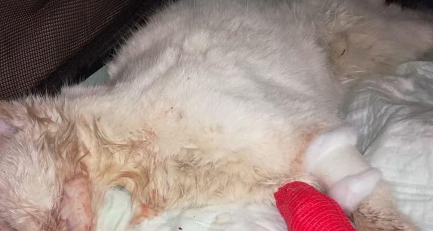 Novogodišnja noć u Karlovcu imala svoju žrtvu - nepoznati psihopat bijes iskalio na uličnoj maci, veterinari se bore za njezin život