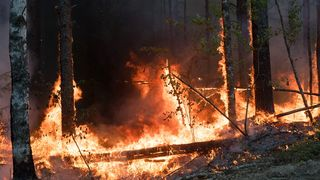 Požari Sibir