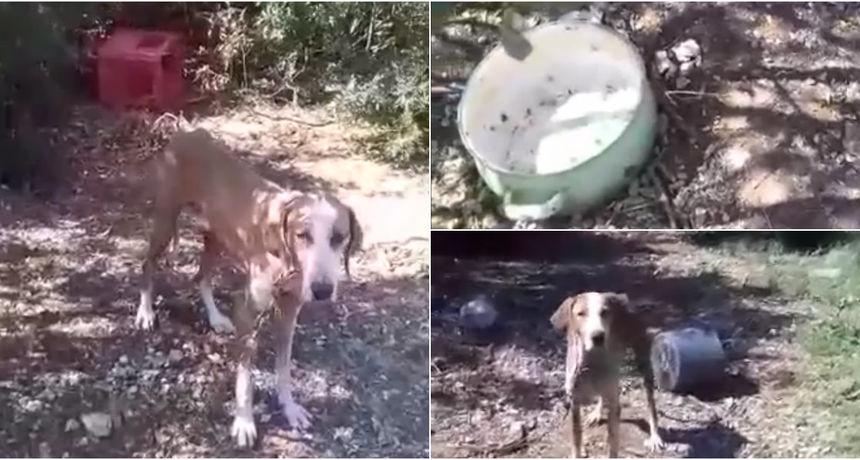 Dobio poticaj da se brine o psima, a zlostavlja ih? Sugrađani: 'Psi umiru, što da radimo?'
