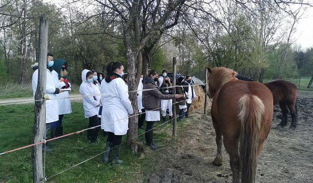 FOTO Zagrebački studenti na praksi u Žabniku: Budući agronomi i veterinari na međimurskoj gmajni