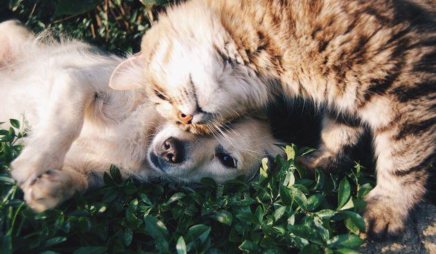 Bliži se ljeto pa vodite računa o tome da i kućne ljubimce zaštitite od UV zraka