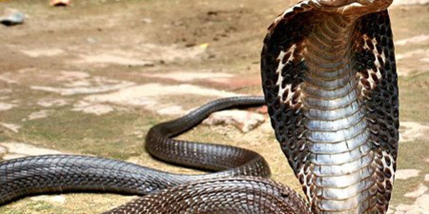 Poslan na doživotnu robiju: Ženu ubio ugrizom kobre. Otkriven jer mu to nije bilo prvi put